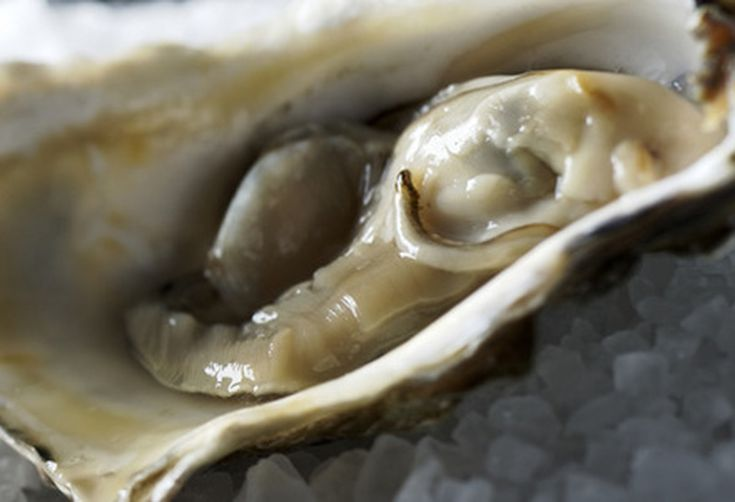 Ccb0ab6f-ffc4-48f7-8386-91283a060350.oysters-large